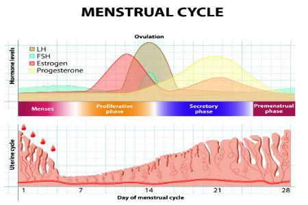 Causas de las alteraciones en la menstruación