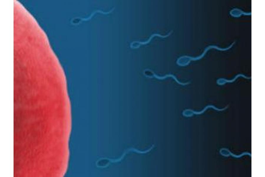 Nueva píldora anticonceptiva para hombres, segura y eficaz